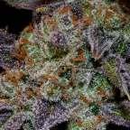 Marijuana Bloom Phase Success Secrets