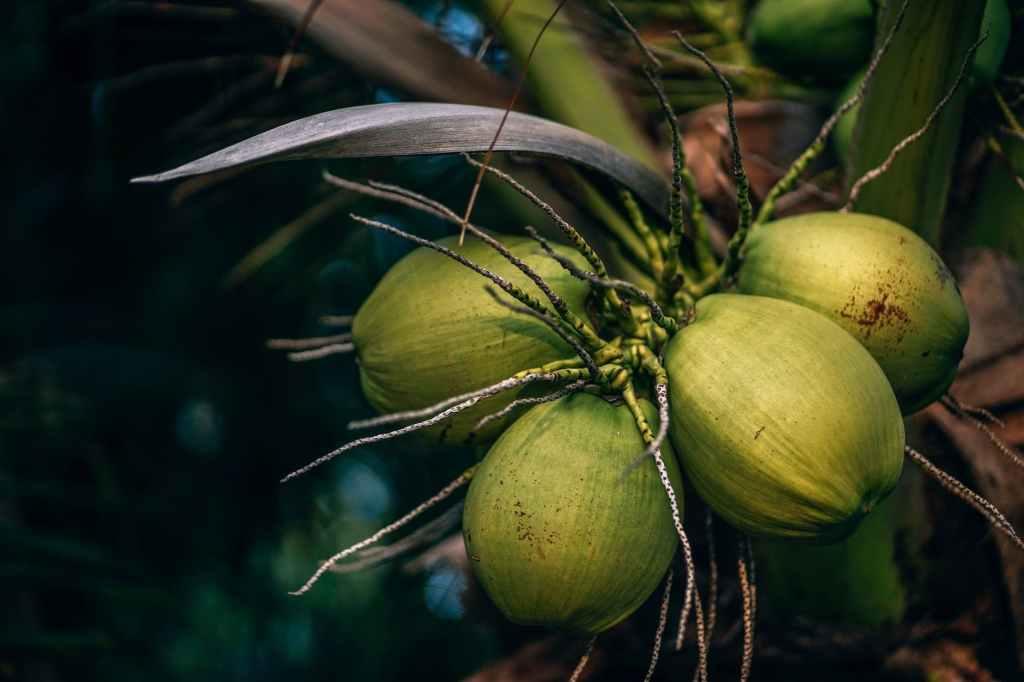 Growing Marijuana in Coco Coir: Insider Secrets – Growing