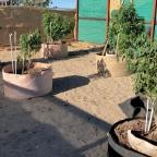 Hot Marijuana Strains To Grow This Summer!