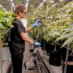 American Company Uses Science & Legal Grow Op to Make Innovative Marijuana Growing Nutrients